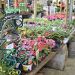 Getting My Backyard Summer Worthy–the start of my Butterfly Garden #DigIn