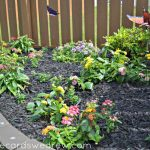 Tips on Creating a Butterfly Garden and Future Gardening Projects #DigIn