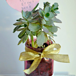 Mason Jar Succulent Gift Idea for Valentine's Day
