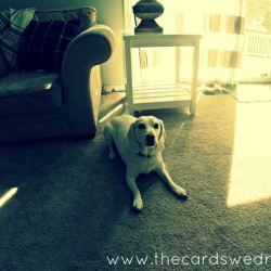 Purina ProPlan Bright Minds Review