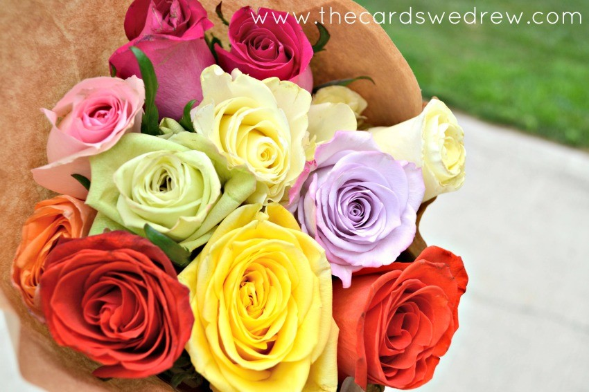 multi colored roses
