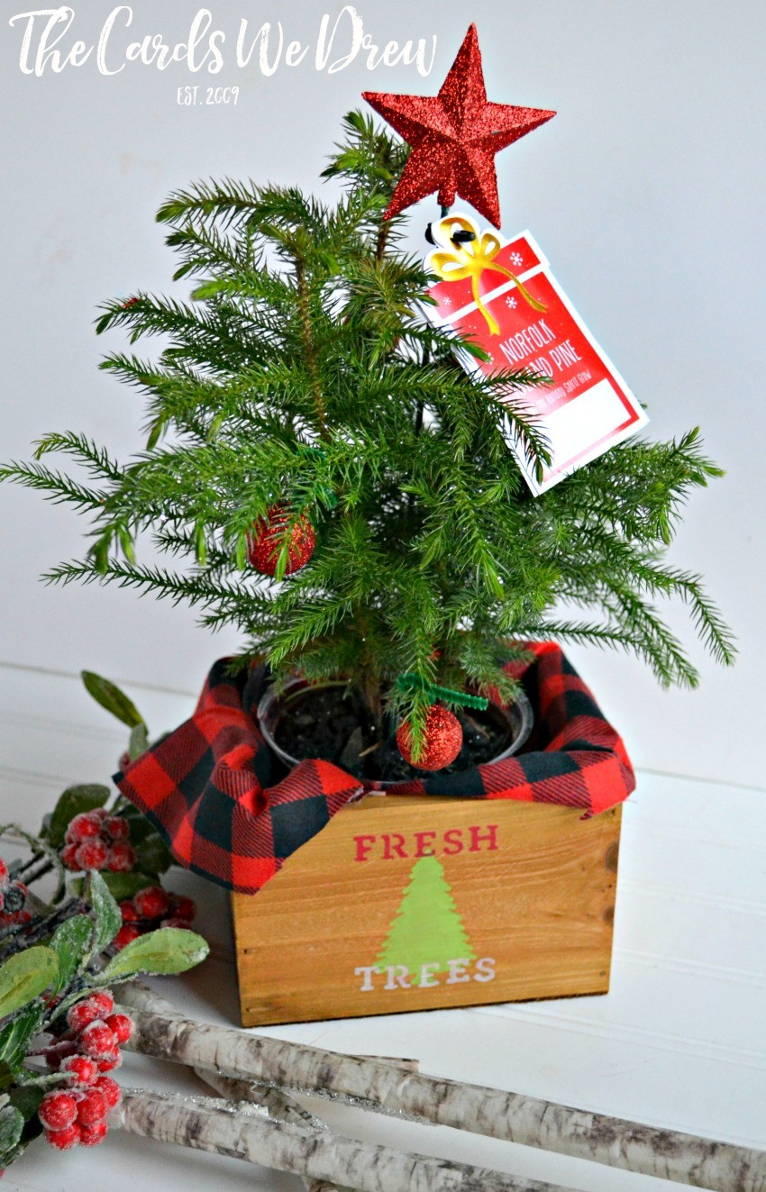30 Minute Gift Idea: Fresh Trees Mini Tree Planter - The Cards We Drew