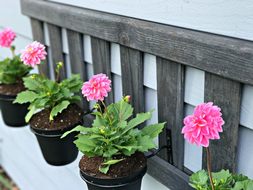 ladder planter stand