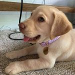 New Puppy Tips with New Puppy Checklist