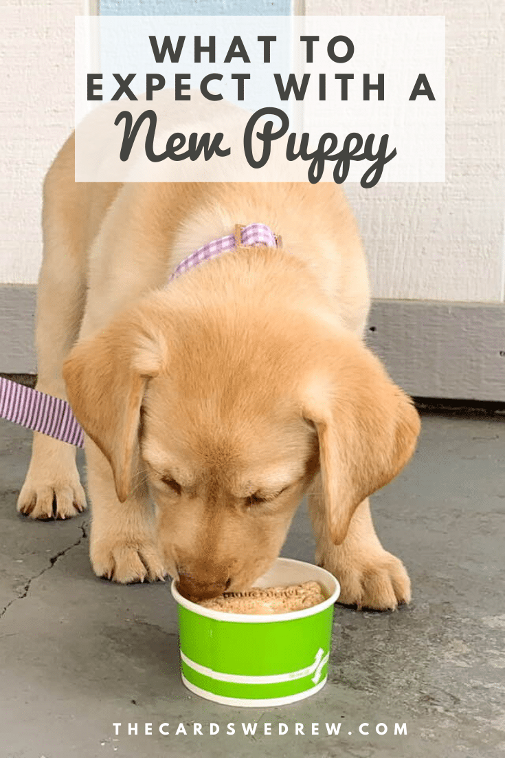 What to Expect with a New Puppy