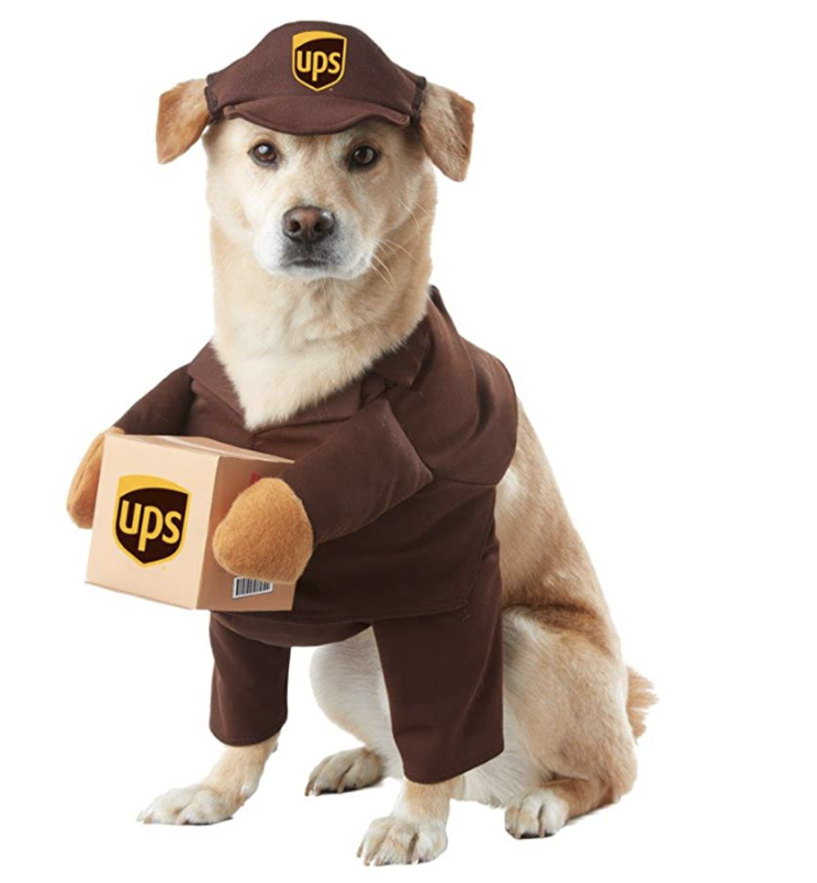 best halloween dog costumes for 2021