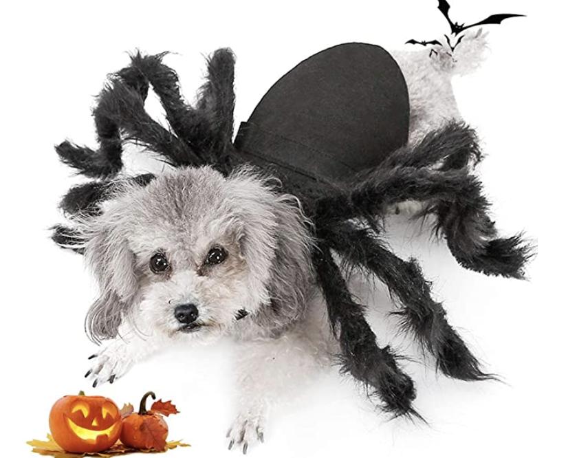 best large dog halloween costumes