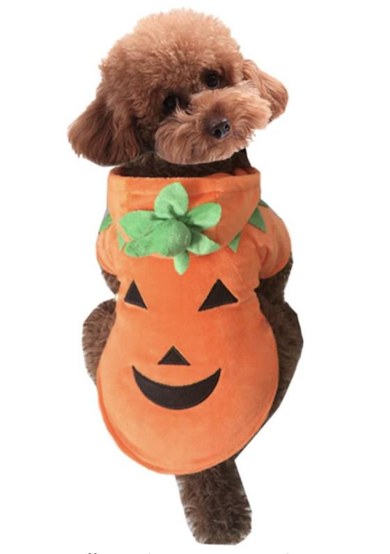 jack-o-lantern dog costume