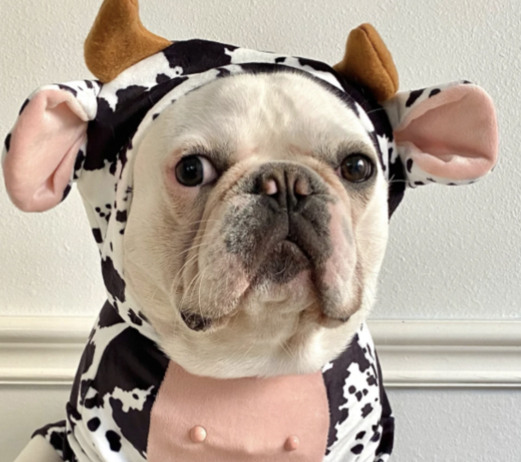 best dog halloween costumes for 2021